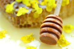 La miel deliciosa, panal, rabina delicada florece Imagenes de archivo
