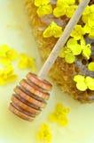 La miel deliciosa, panal, rabina delicada florece Foto de archivo libre de regalías
