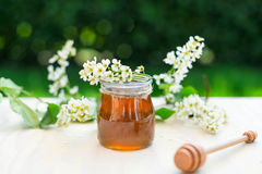 La miel y el acacia florece con un cazo de madera en fondo del jardín Imagenes de archivo