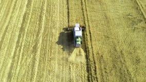 La mietitrebbiatrice di vista aerea riunisce il grano archivi video