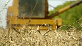La mietitrebbiatrice riunisce il raccolto del grano agricoltura Colpo lento stock footage