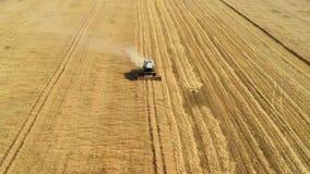 La mietitrebbiatrice riunisce il raccolto del grano Grano che raccoglie i tagli video d archivio
