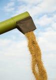 La mietitrebbiatrice scarica i semi della soia dopo il raccolto Immagine Stock Libera da Diritti