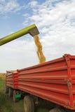 La mietitrebbiatrice scarica i semi della soia dopo il raccolto Fotografia Stock Libera da Diritti