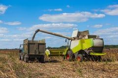 La mietitrebbiatrice sovraccarica i semi di girasole in un rimorchio di trattore sul campo Fotografia Stock