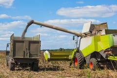 La mietitrebbiatrice sovraccarica i semi di girasole in un rimorchio di trattore sul campo, Immagini Stock