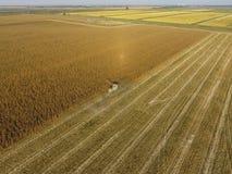 La mietitrebbiatrice versa il grano del cereale nel corpo del camion La mietitrice raccoglie il cereale Immagini Stock Libere da Diritti
