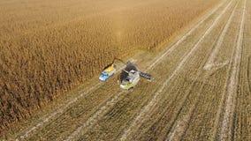La mietitrebbiatrice versa il grano del cereale nel corpo del camion La mietitrice raccoglie il cereale Fotografia Stock