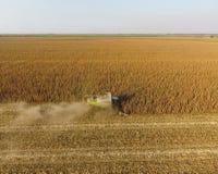La mietitrice raccoglie il cereale Raccolga le pannocchie di granturco per mezzo di una mietitrebbiatrice Cereale maturo sul camp Immagine Stock Libera da Diritti