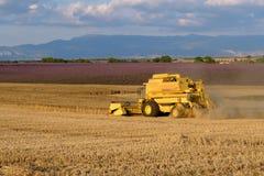 La mietitrice riunisce il raccolto del grano Immagini Stock