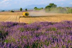 La mietitrice riunisce il raccolto del grano Immagine Stock Libera da Diritti