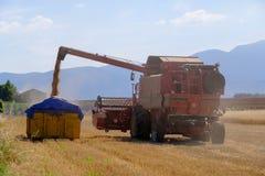 La mietitrice riunisce il raccolto del grano Fotografia Stock