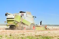 La mietitrice sta funzionando nel campo e la cicogna sta cercando l'alimento vicino Immagini Stock