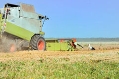 La mietitrice sta funzionando nel campo e la cicogna sta cercando l'alimento vicino Fotografie Stock