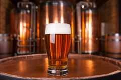 La migliore birra in città Fotografia Stock