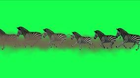 la migrazione degli animali degli asini del cavallo delle zebre del gruppo 4k esegue il fumo, pascolo dell'Africa royalty illustrazione gratis