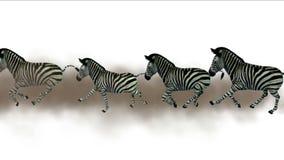 la migrazione degli animali degli asini del cavallo delle zebre del gruppo 4k esegue il fumo, pascolo dell'Africa illustrazione vettoriale