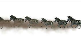 la migrazione degli animali degli asini del cavallo delle zebre del gruppo 4k esegue il fumo, pascolo royalty illustrazione gratis