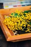 La mimosa jaune fleurit le groupe dans un cadre en bois sur une table fin Image stock