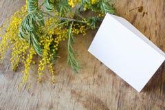 La mimosa y una tarjeta vacía con un oro arquean Foto de archivo