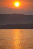 La Mina Beach i Paracas den nationella reserven, Peru fotografering för bildbyråer