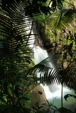 La Mina Falls through Palm Fronds Stock Photography