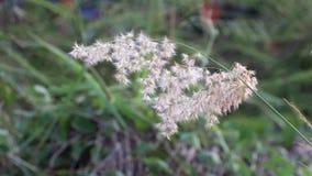 La mini hierba de la flor sea poco viento que sopla y hacia fuera enfoca el fondo verde metrajes