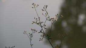 La mini hierba de la flor sea viento que sopla y hacia fuera enfoca el fondo del agua almacen de metraje de vídeo