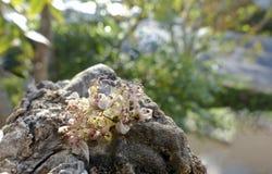 La miniatura florece el primer en la madera de deriva Imagen de archivo