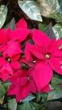 La mirada de la Navidad foto de archivo