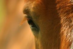 La mirada/der Blick Lizenzfreie Stockfotos