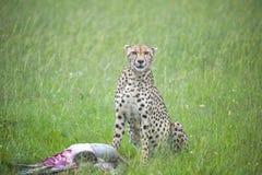 La mirada fija del depredador Foto de archivo