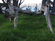 La mirada hacia fuera hacia Marin Headlands de tierras termina Fotos de archivo