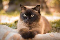 La mirada preciosa de un felino imagenes de archivo