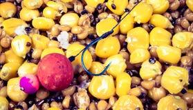 La miscela dei grani come esca che pesca per la grande carpa immagine stock libera da diritti