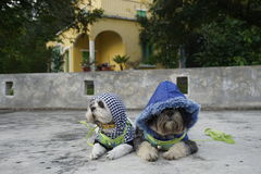 La moda viste el perro lindo Imagen de archivo