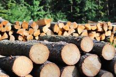 La moisson du bois dans la forêt les rondins sciés se situent dans le tas de bois Chauffage des lieux dans le village Déboisement image libre de droits