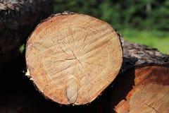 La moisson du bois dans la forêt les rondins sciés se situent dans le tas de bois Chauffage des lieux dans le village Déboisement photographie stock libre de droits