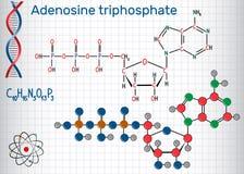 La molecola di ATP dell'adenosina trifosfato, è energia intracellulare illustrazione di stock
