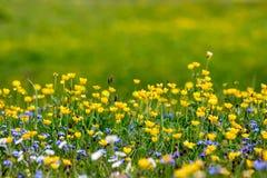 La molla alpina fiorisce con fondo molle nelle montagne Immagini Stock