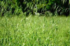 La molla comincia le piante per svilupparsi fotografie stock libere da diritti