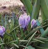 La molla dei fiori si inverdisce la natura piacevole Lussemburgo Immagine Stock
