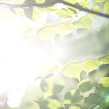 La molla eterea luminosa lascia il fondo Immagine Stock