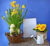 La molla fiorisce il giacinto, narciso, primula su un fondo la c Fotografie Stock Libere da Diritti