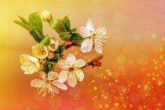 La molla fiorisce la cartolina d'auguri Fotografia Stock Libera da Diritti