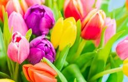 La molla variopinta fiorisce, bello mazzo dei tulipani, primo piano Fotografia Stock