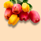 La molla variopinta fiorisce i tulipani del mazzo Immagine Stock