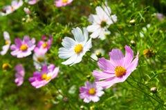 La molla variopinta fiorisce il fondo Immagini Stock