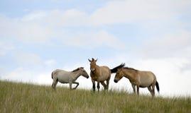 La Mongolie Images stock