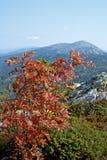 Paisajes de la montaña en el parque nacional Taganai Foto de archivo libre de regalías